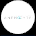 anemocyte